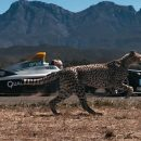 Видео: Электрокар против гепарда: кто кого