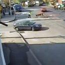 Видео: Буренка попробовала «удар Зидана» нагаишнике